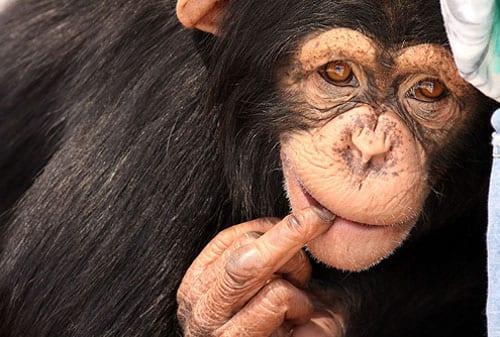 8 Hewan Paling Kaya di Dunia, Apa Sajakah Mereka Kalu - Finansialku