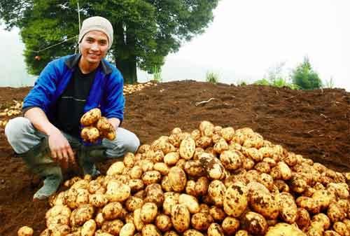 da-ada Aja Penipuan Pakai Skema Bisnis Agrobisnis