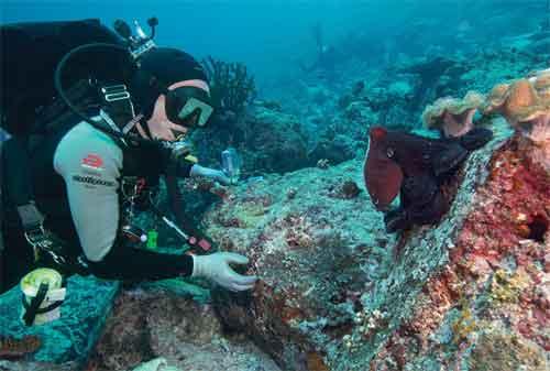 Life Goal! Kunjungi 5 Pulau Terindah di Indonesia Sebelum Ajal Memanggil 02 - Finansialku