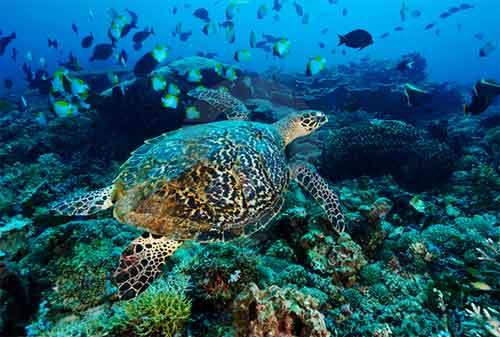 Life Goal! Kunjungi 5 Pulau Terindah di Indonesia Sebelum Ajal Memanggil 04 - Finansialku