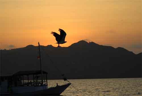 Wisata Pulau Komodo Yang Dilirik Wisatawan Lokal Maupun Wisatawan Mancanegara 07 - Finansialku