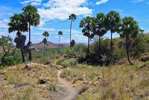 Rencanakan Dana Liburan untuk Melihat Keindahan Pulau Komodo (Hemat dan Murah) 05 - Finansialku