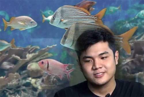 Kisah Sukses Nicholas Kurniawan, Pengusaha Ikan Hias 04 - Finansialku
