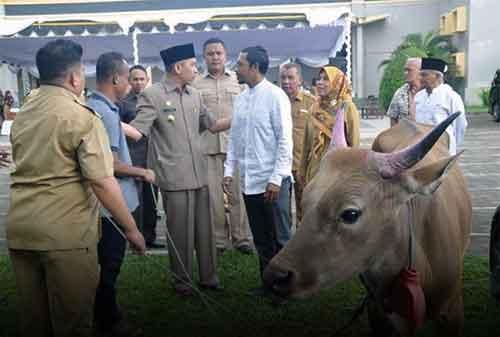 Sapi Jokowi di Masjid Istiqlal, Berbobot 1,5 Ton. Selain itu Ada juga Dibeberapa Kota - 02 - Finansialku