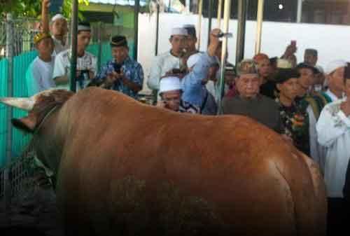 Sapi Jokowi di Masjid Istiqlal, Berbobot 1,5 Ton. Selain itu Ada juga Dibeberapa Kota - 04 - Finansialku