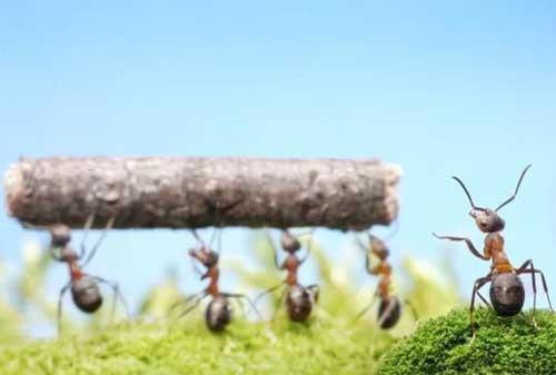4 Alasan Mengapa Kita Harus Belajar Kehidupan dari Semut-semut Kecil 02 - Finansialku