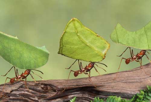 4 Alasan Mengapa Kita Harus Belajar Kehidupan dari Semut-semut Kecil 03 - Finansialku
