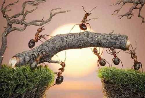 4 Alasan Mengapa Kita Harus Belajar Kehidupan dari Semut-semut Kecil 05 - Finansialku
