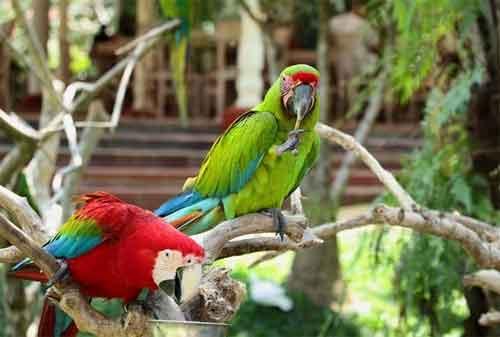 Paket Wisata Bali 07 Bali Bird Park - Finansialku