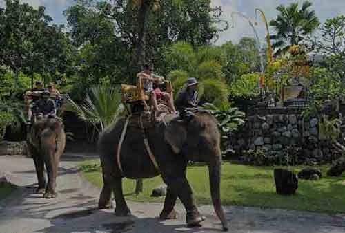 Wisata-di-Bali-06a-Taman-Safari-Gajah---Finansialku