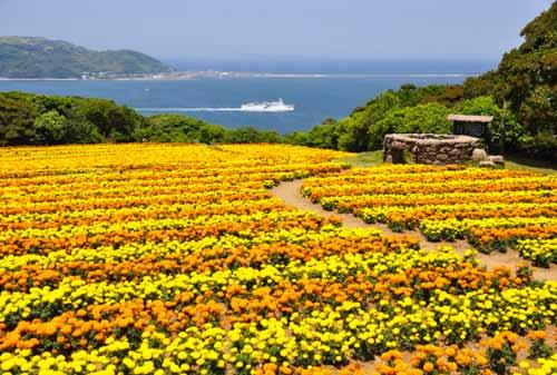 22-Nokonoshima-Island-Park-Finansialku