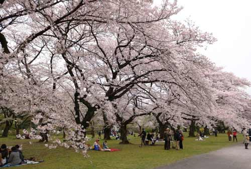Koishikawa-Botanical-Garden-7-Finansialku