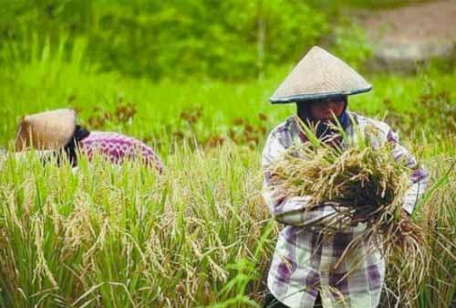 Reforma-Agraria-Melalui-Sertifikasi-Tanah-Ala-Jokowi-5-Finansialku
