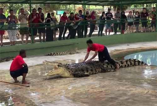 Tempat Wisata di Malaysia 21 Langkawi Crocodile Farm - Finansialku