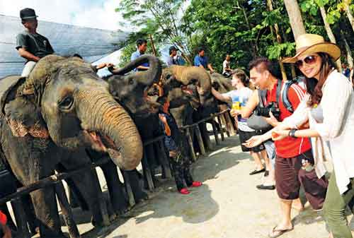 Tempat Wisata di Malaysia 26 Kuala Gandah Elephant Orphanage Sanctuary - Finansialku