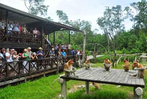 Tempat Wisata di Malaysia 29 Garama Proboscis Monkey Sanctuary - Finansialku