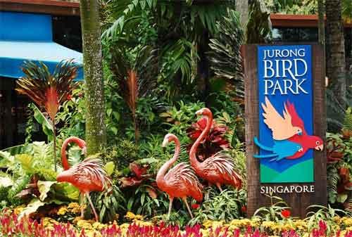 Tempat Wisata di Singapura 38 Jurong Bird Park - Finansialku