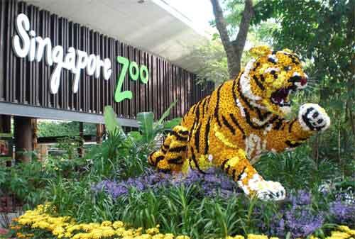 Tempat Wisata di Singapura 40 Singapore Zoo- Finansialku