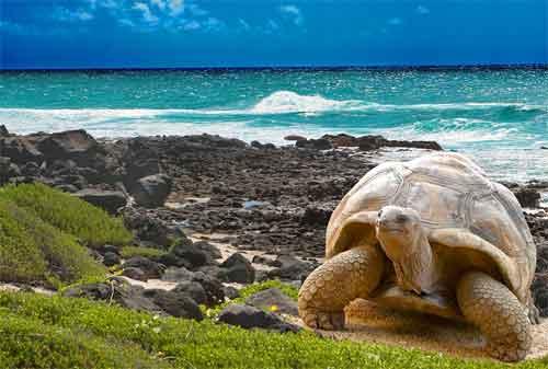 Tempat Wisata yang Akan Hilang Dari Muka Bumi 08 Pulau Galapagos - Finansialku