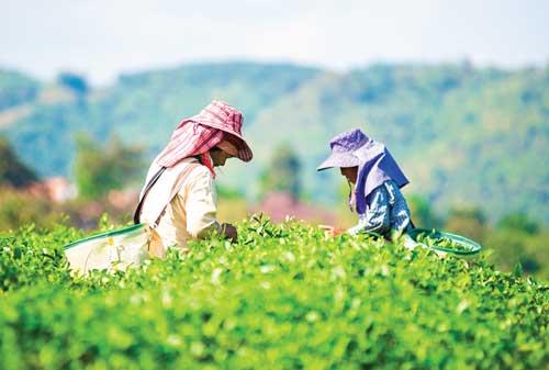 Tips dan Trik Sukses Memulai Usaha Agribisnis yang Patut Anda Coba