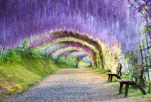Keren, Bukan Editan! Ini 10+ Tempat Wisata Unik di Dunia 07 Kawachi Fuji Garden - Finansialku