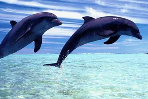 Keren, Bukan Editan! Ini 10+ Tempat Wisata Unik di Dunia 14 Lumba-lumba - Finansialku