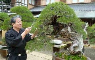 10 Pohon Bonsai Termahal di Dunia yang Indah, Unik dan Langka 01 - Finansialku