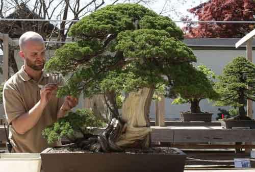 10 Pohon Bonsai Termahal di Dunia yang Indah, Unik dan Langka 02 Bonsai 2 - Finansialku