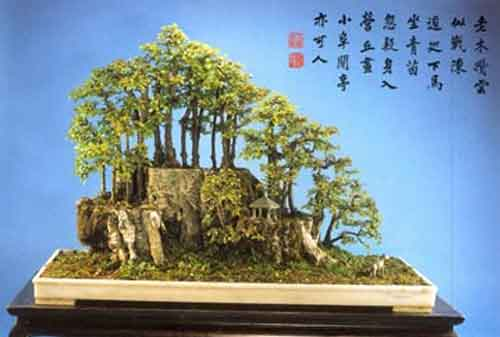 10 Pohon Bonsai Termahal di Dunia yang Indah, Unik dan Langka 07 Bonsai 7 - Finansialku