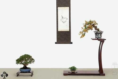 10 Pohon Bonsai Termahal di Dunia yang Indah, Unik dan Langka 10 Bonsai 10 - Finansialku