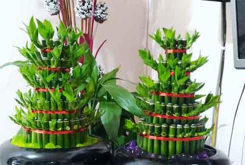 Harmoni Di Balik Kesuksesan Bisnis Lucky Bamboo Sukabumi 02 - Finansialku