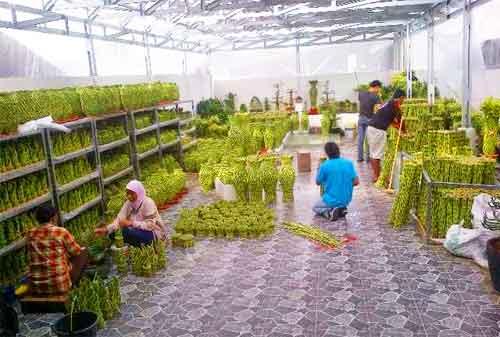 Harmoni Di Balik Kesuksesan Bisnis Lucky Bamboo Sukabumi 05 - Finansialku