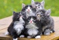 Kucing Termahal di Dunia 01 - Finansialku