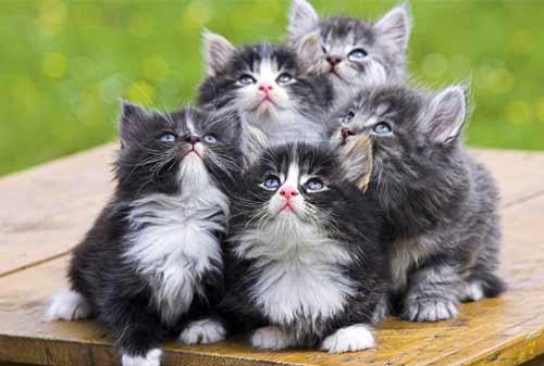 Download 96+  Gambar Kucing Anggora Indah Terbaru
