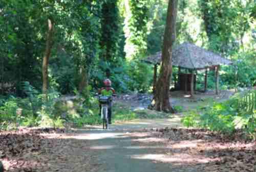 Tempat Wisata Jawa Tengah 11 Hutan Penggaron - Finansialku