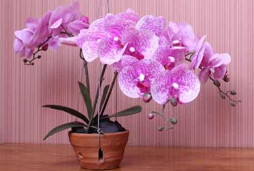 Biar Lebih Menawan dan Indah, Ini Jenis Bunga Hias yang Bisa Kamu Pakai 02 Bunga Anggrek - Finansialku