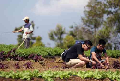Bintan Island 08 Bintan Resorts' Eco Farm - Finansialku