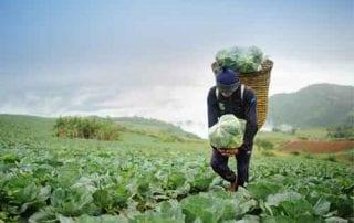 Ketahui Dulu 10 Hal Penting Ini Jika Ingin Investasi Tanah Kebun Menguntungkan 01 - Finansialku