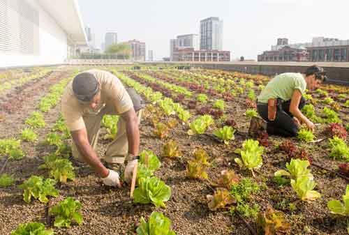 Ketahui Dulu 10 Hal Penting Ini Jika Ingin Investasi Tanah Kebun Menguntungkan 02 - Finansialku