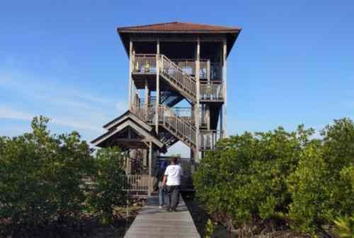 Liburan ke Pulau Karimun Jawa 05 Hutan Mangrove - Finansialku