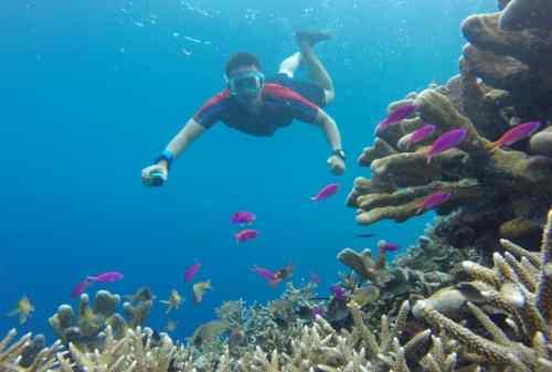 Liburan ke Pulau Karimun Jawa 06 Snorkeling - Finansialku
