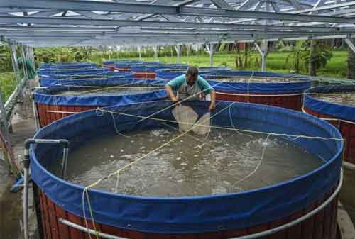 Panduan Lengkap Budidaya Ikan Nila Agar Cepat Panen 02 - Finansialku