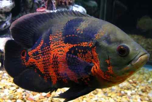 Download Video Ikan Hias Aneka Ikan Hias