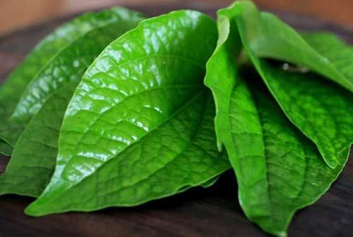 Tanaman Herbal Obat 03 (Sirih) - Finansialku