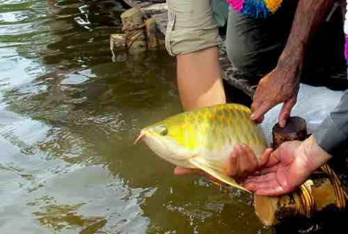 Tips Sukses Memulai Bisnis Budidaya Ikan Arwana 04 - Finansialku